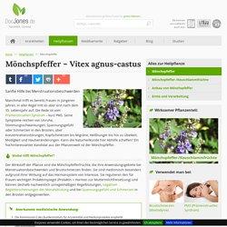 Mönchspfeffer/Keuschlamm: Alles zur Heilpflanze
