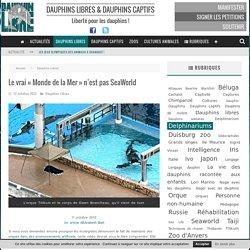 """Le vrai """"Monde de la Mer"""" n'est pas SeaWorld - Dauphinlibre.be"""