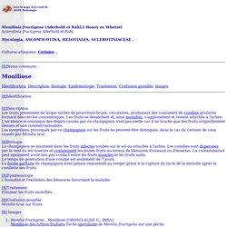 <I>Monilinia fructigena</I> (Aderhold <I>et</I> Ruhl.) Honey <I>ex</I> Whetzel
