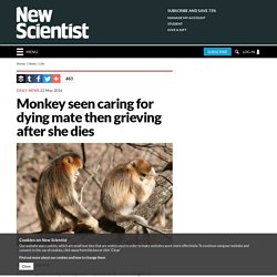 Monkey seen caring for dying mate then grieving after she dies