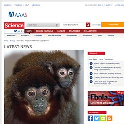 New Virus Jumps From Monkeys to Lab Worker