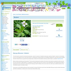 Bacopa Monnieri - Brahmi Plants For Sale