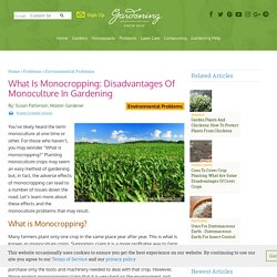 #5 Monoculture Crops - Learn About The Effects Of Monocropping