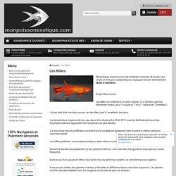 Les Killies - monpoissonexotique.com - Aquariophilie, poissons et plantes d'aquarium en ligne