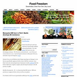 FOOD FREEDOM 24/08/11 Monsanto GM Corn in Peril: Beetle develops Bt-resistance