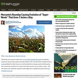 """Monsanto's Roundup Causing Evolution of """"Super-Weeds"""" That Grow 3 Inches a Day"""
