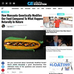 How Monsanto Genetically Modifies Our Food Compared To What Happens Naturally In Nature