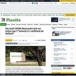 """Un maïs OGM Monsanto mis en échec par l'""""insecte à 1 milliard de dollars"""""""