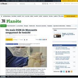 Un maïs OGM de Monsanto soupçonné de toxicité