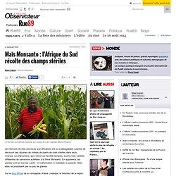Maïs Monsanto: l'Afrique du Sud récolte des champs stériles