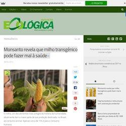 Monsanto revela que milho transgênico pode fazer mal à saúde
