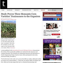 Study Proves Three Monsanto Corn Varieties' Noxiousness to the Organism