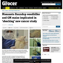 Monsanto weedkiller and GM maize in 'shocking' cancer study