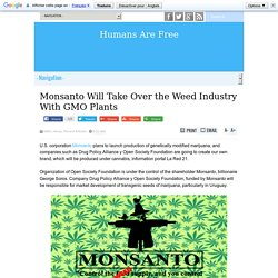 Monsanto Will Take Over the Weed Industry With GMO Plants