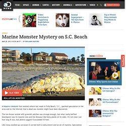 Marine Monster Mystery on S.C. Beach