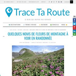Guide : NOMS DE FLEURS DE MONTAGNE à voir en randonnée