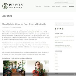 Shop Update: A Pop-up Plant Shop in Montavilla - Pistils Nursery