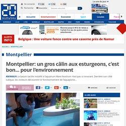 Montpellier: un gros câlin aux esturgeons, c'est bon... pour l'environnement
