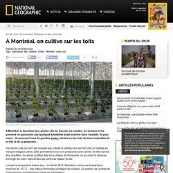 #COP21 - À Montréal, on cultive sur les toits