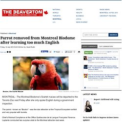 Parrot removed from Montreal Biodome after learning too much English - The Beaverton - North America's Trusted Source of News