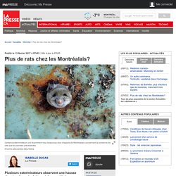 Plus de rats chez les Montréalais?
