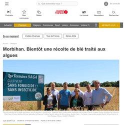 OUEST FRANCE 17/07/19 Morbihan. Bientôt une récolte de blé traité aux algues