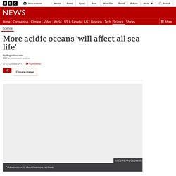 More acidic oceans 'will affect all sea life'