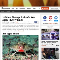 21 More Strange Animals You Didn't Know Exist