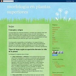 morfologia en plantas superiores: hojas