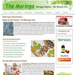 Moringa Information