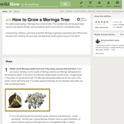 How to Grow a Moringa Tree (with pictures)