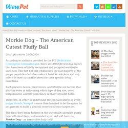 Morkie Dog - The American Cutest Fluffy Ball - WewPet