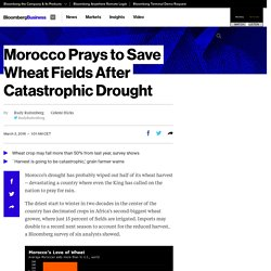 Morocco Prays to Save Wheat Fields After Catastrophic Drought