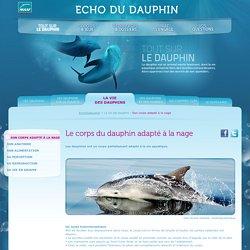 Morphologie dauphin : corps adapté à la nage