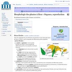Morphologie des plantes à fleur/Organes, reproduction