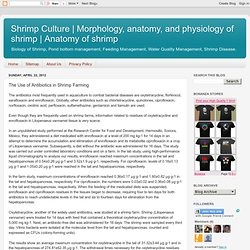 BLOG SHRIMP CULTURE 22/04/12 The Use of Antibiotics in Shrimp Farming