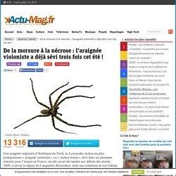 ACTU MAG 14/07/15 De la morsure à la nécrose : l'araignée violoniste a déjà sévi trois fois cet été !