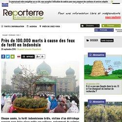 100.000 morts pour fabriquer de l'huile de palme
