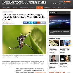 IB TIMES 20/10/13 Yellow Fever Mosquito, Aedes Aegypti, Found In California, Is 'Very Difficult To Control'