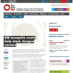 GM mosquito could help slash dengue vectors