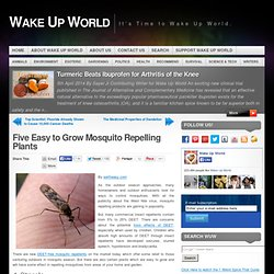 Five Easy to Grow Mosquito Repelling Plants