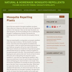 Natural & Homemade Mosquito Repellants