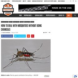 How to Deal with Mosquitoes Without Using Chemicals - The Prepper Journal