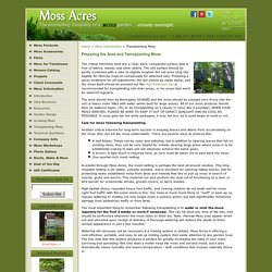 Moss Acres: Transplanting moss