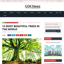 15 Most Beautiful Trees in the World - Gok News