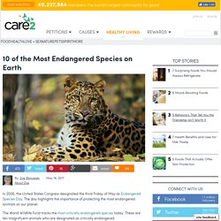10 Of The Most Endangered Species On Earth