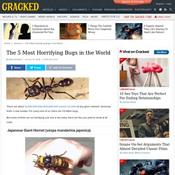 The 5 Most Horrifying Bugs in the World
