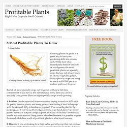 8 Most Profitable Plants To Grow