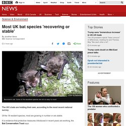 Most UK bat species 'recovering or stable'