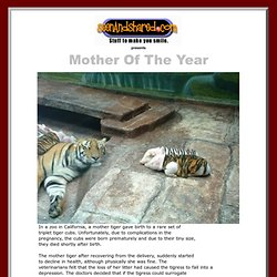 Mother Of The Year :: SeenAndShared.com